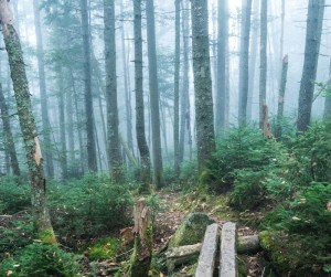 Morning fog slips between  the firs along the Kinsman Ridge trail.