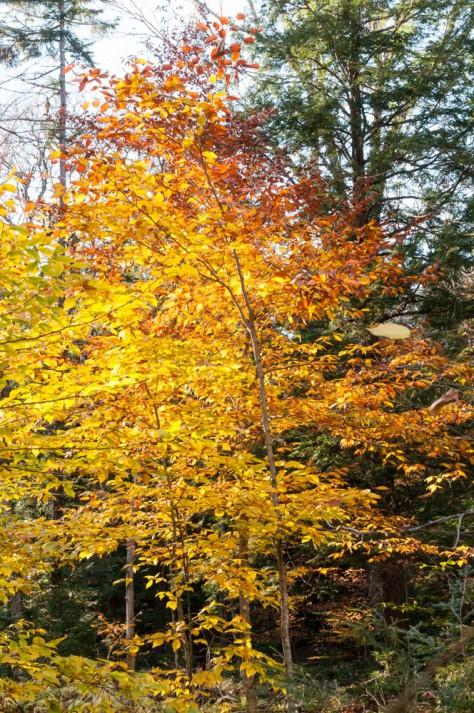 Fall colors along the Mount Kinsman Trail.