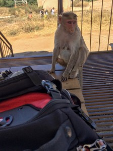 monkey and my backpack