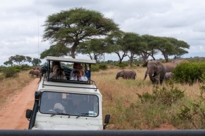We stop to watch the elephants in Tarangire National Park.