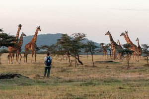 Erin creeps closer to watch the giraffes, Enashiva reserve.