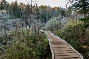 A frosty bridge over a bog near the beginning of the trail to Marcy Dam.