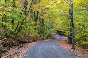 Pretty fall colors, along Lake Road into Ausable Lake.