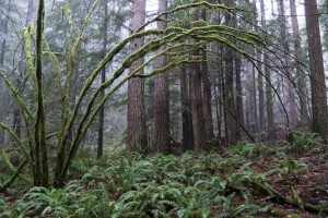 An eery rainforest of moss and epiphytes covers the lower elevations.