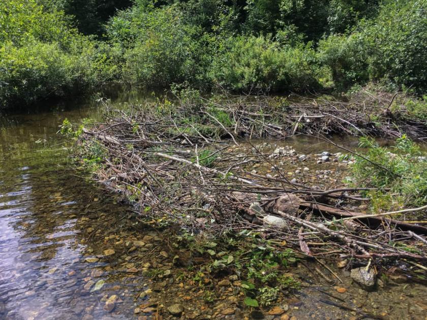 A beaver dam across Grant Brook.