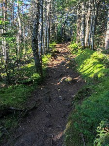 Pleasant ridge walking, Bigelow Mountain, Maine.